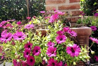 souris-garden